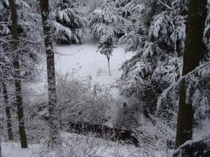 Meadow in winter