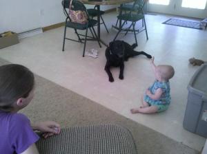 baby and labrador retriever