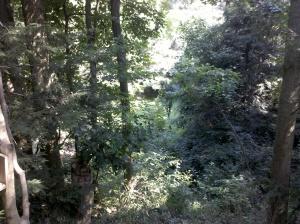 Meadow below the deck