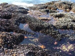 Tide pools at Crescent Bay, Laguna Beach, CA
