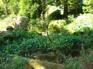 Wordsworth gardens
