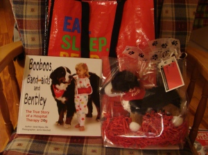 Booboos, Band-aids and Bentley therapy dog Bernese mountain dog