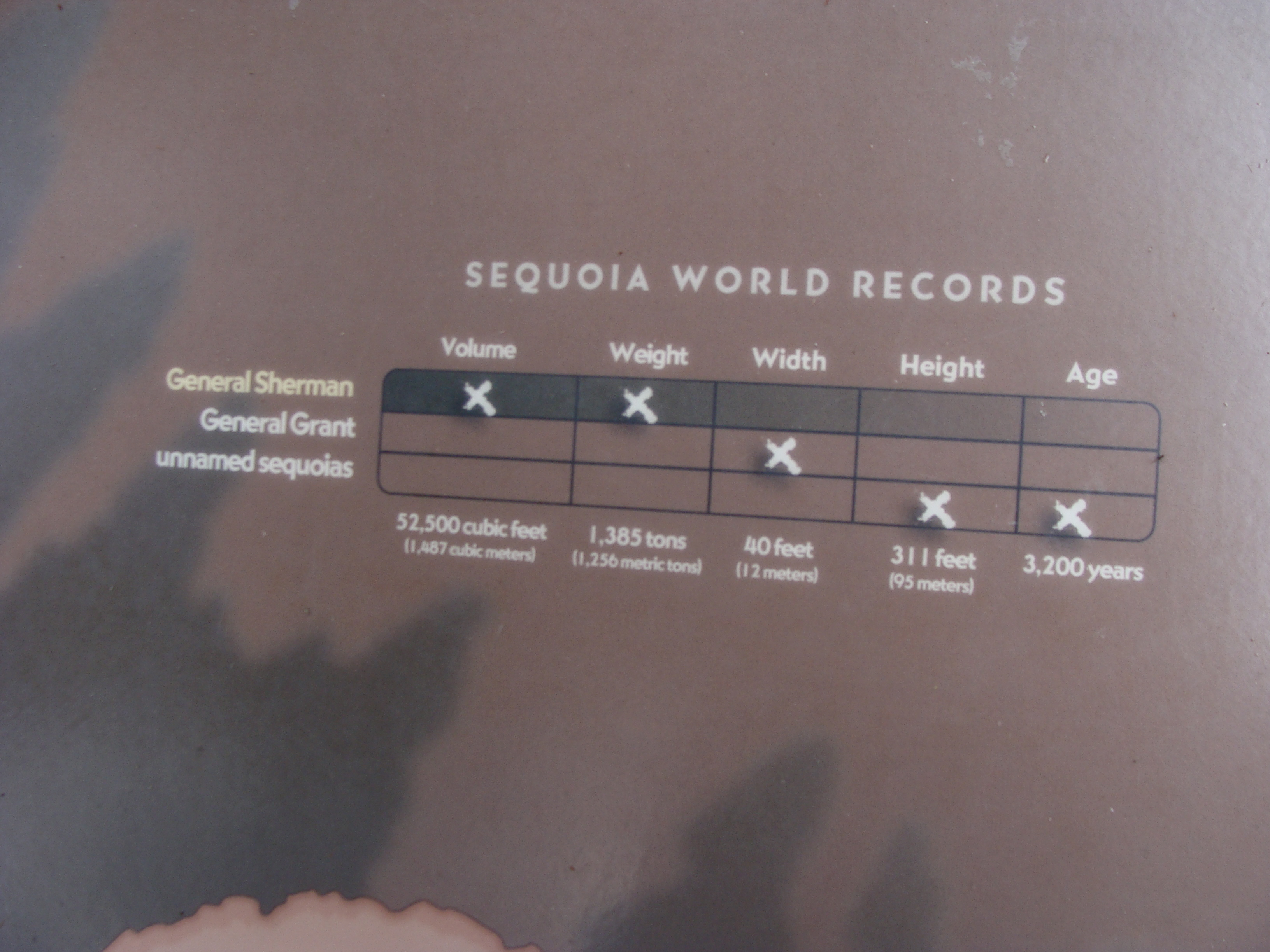Sequoia Tree facts   MarLa Sink Druzgal