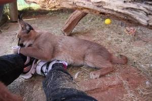 expat life Pretoria wildlife parks petting baby animals