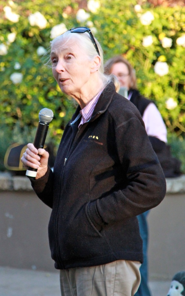 expat life meeting Jane Goodall Johannesberg South Africa