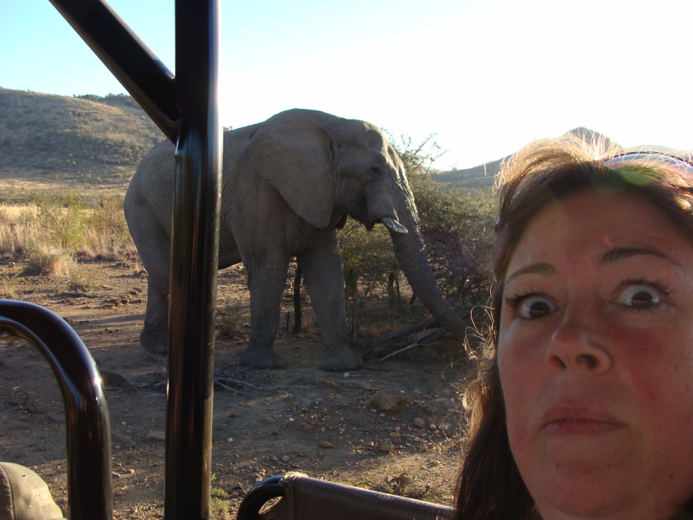expat life Pretoria Africa travel world elephant day