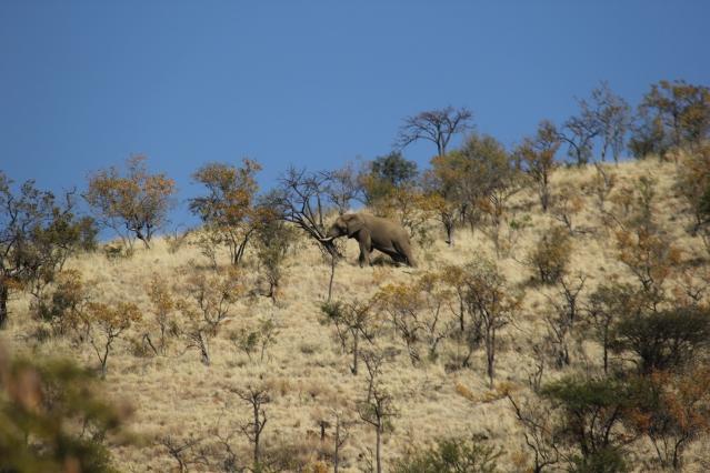 expat life Pretoria Africa travel world elephant day