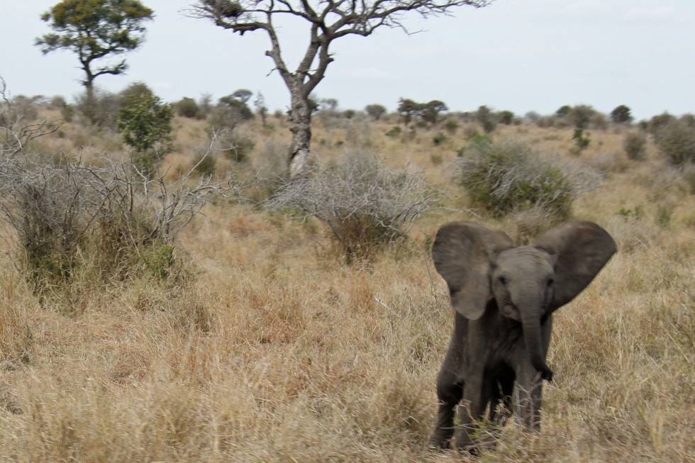 expat life Pretoria Africa travel what are the big five where to see South Africa