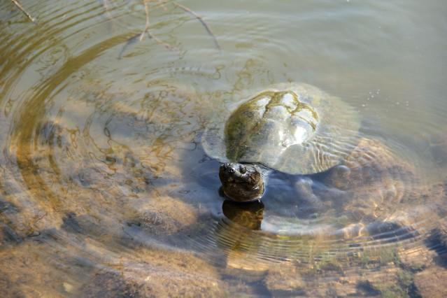 turtles in Kruger National Park expat life Pretoria South Africa travel