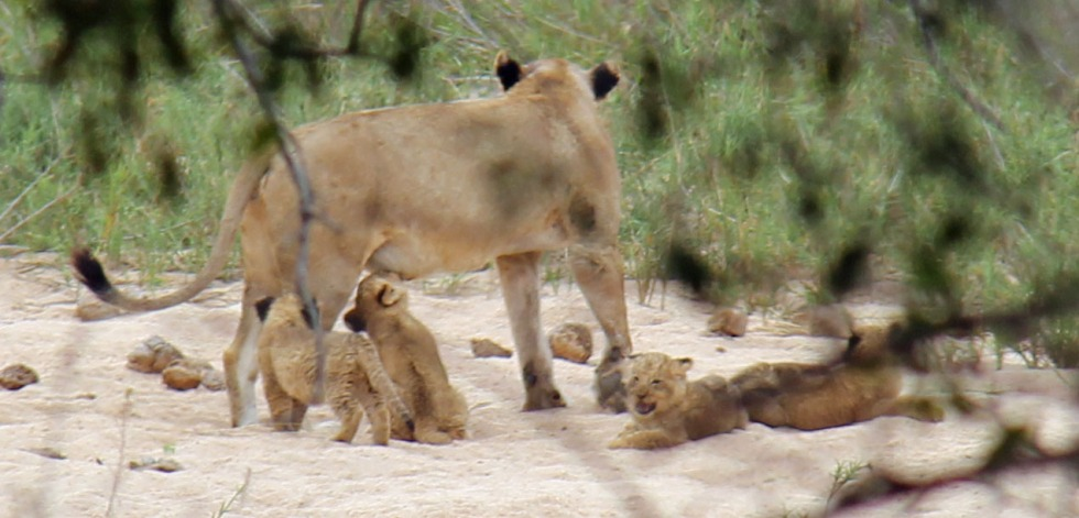 expat life Pretoria where to see the big five in South Africa travel