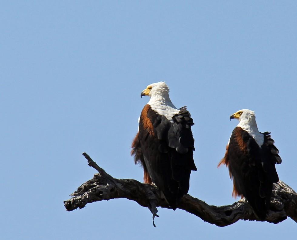 expat life Pretoria South Africa travel Kruger National Park