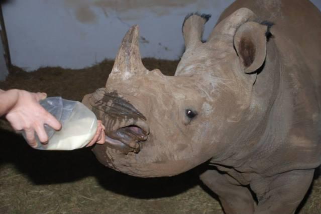 expat life Pretoria South Africa travel rhino conservation