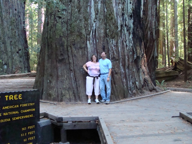 Redwood Forest National Park California