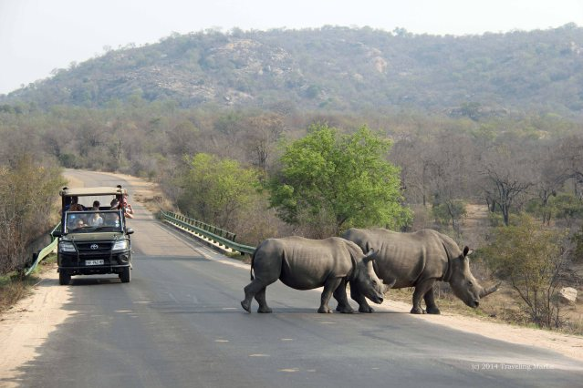 This is the actual distance we are from the rhinos. As you can see we are much farther away than the previously zoomed photos would lead you to believe. And we are much farther away than that safari vehicle!