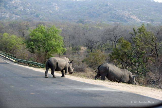 SanWild Rhino Sanctuary Kruger National Park white rhino rhinos in Kruger crossing road