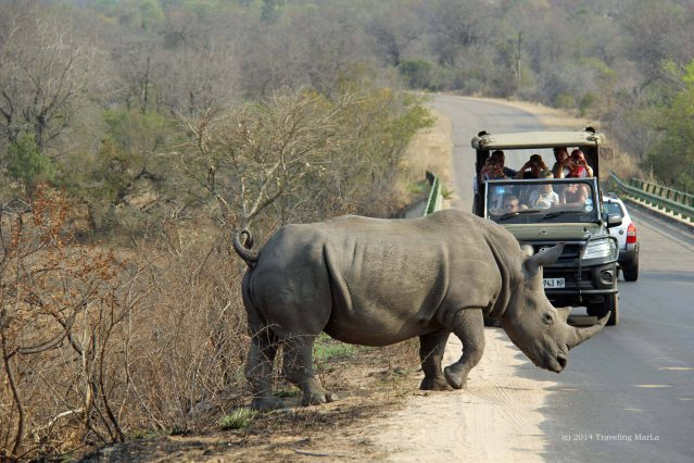 Mama rhino checking out the road before her (yearling perhaps?) joined her.