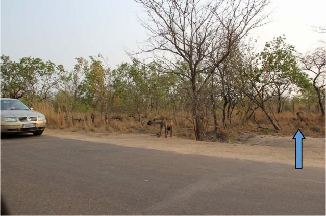 Kruger National Park travel South Africa expat life Pretoria