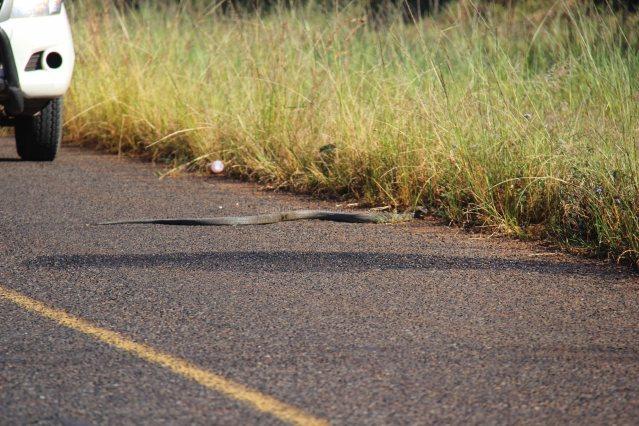 black mamba Africa travel