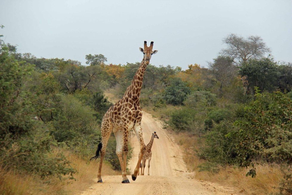 travel Africa