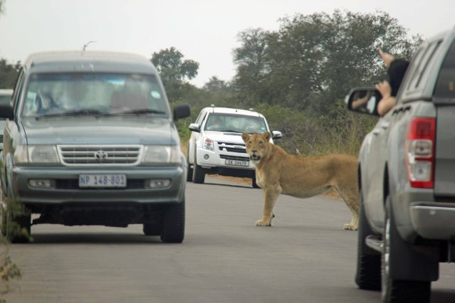 lions Africa travel