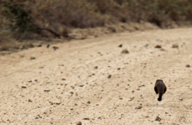 mongoose Africa travel