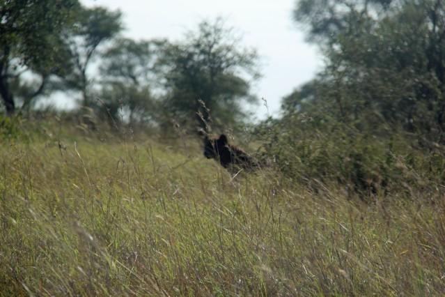travel Africa hyena