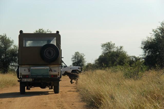 hyena Africa travel