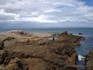 travel Africa Hermanus whales