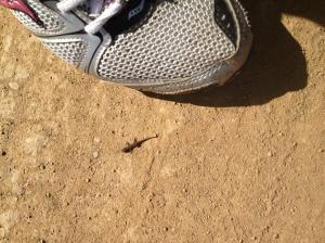 travel Africa gecko